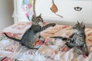 mačky v posteli
